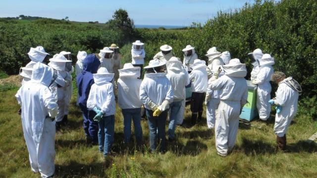 Formation apiculture .